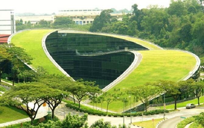 Зелені насадження на дахах
